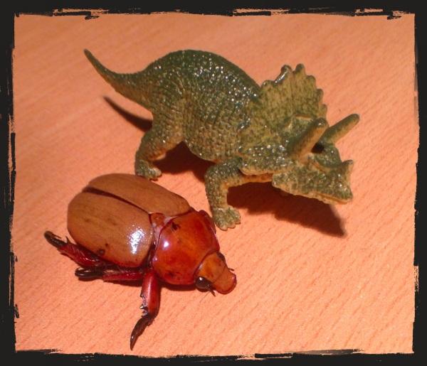 Trig - beetle