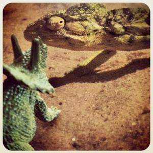 Trig - chameleon