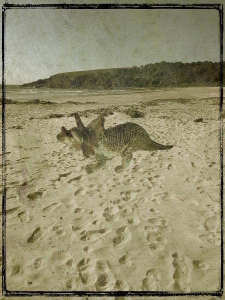 Trig - beach
